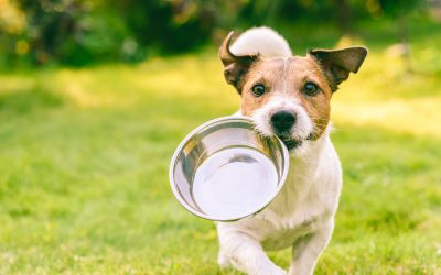 Pet Food and Animal Feed Market 2020